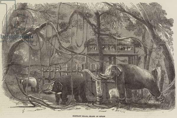 Elephant Kraal, Island of Ceylon (engraving)