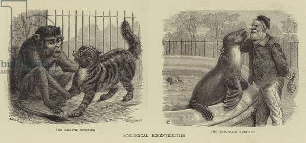 Zoological Eccentricities (engraving)