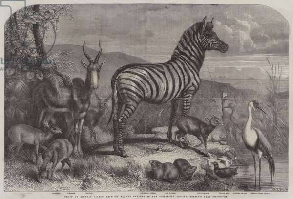 Group of Animals lately received at the Gardens of the Zoological Society, Regent's Park (engraving)