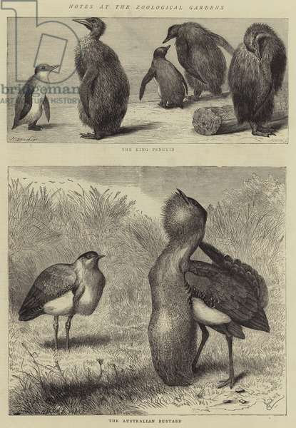 Notes at the Zoological Gardens (engraving)