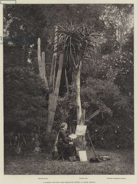 A Floral Painter (Miss Marianne North) in South Africa (engraving)