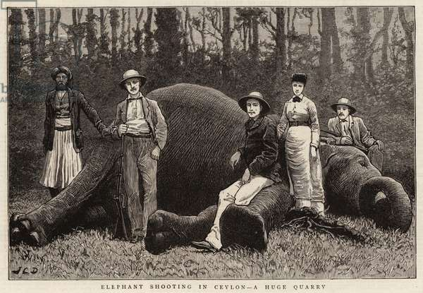 Elephant Shooting in Ceylon, a Huge Quarry (engraving)