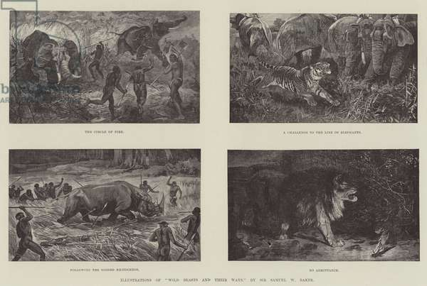 "Illustrations of ""Wild Beasts and their Ways,"" by Sir Samuel W Baker (engraving)"