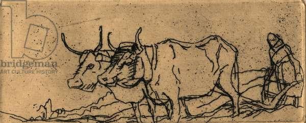 L'Ombre de la Croix - Oxen, 1931 (etching)