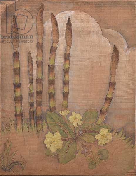 Horsetail shoots (Equisetum sp) with primrose (Primula vulgaris) and violet (Viola sororia) (coloured woodcut)