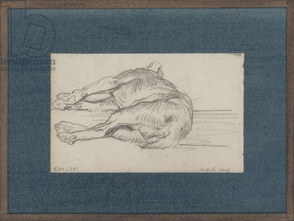 Study of a sleeping dog (pencil on paper)