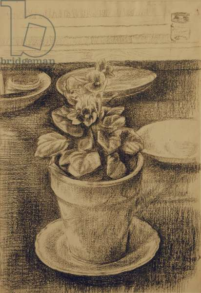 Still Life, African Violet in a flower pot, late 1960s (chalk on paper)