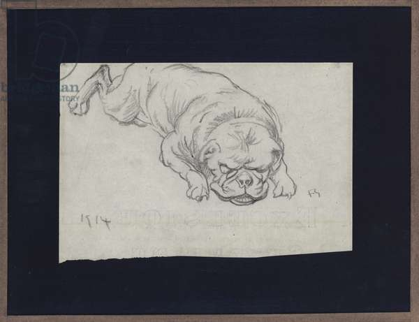 Bulldog (pencil on paper)