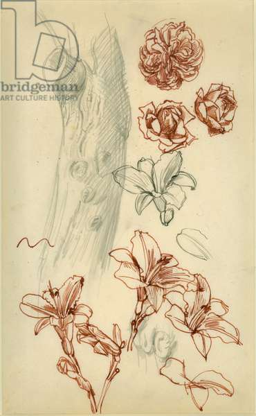 Roses, Lilies and Tree Trunk (pen & ink & pencil on paper)