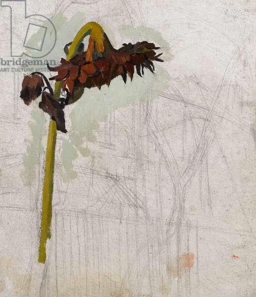 Study of a Sunflower, c.1940 (oil on prepared board)