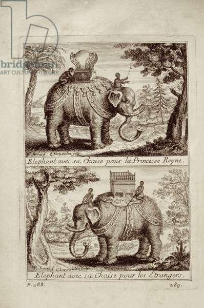 Royal elephants, from 'Voyage du Siam des Peres Jesuites' by Guy Tachard, 1688 (litho)