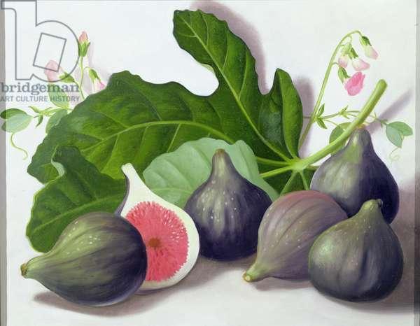 Figs, 2001 (oil on panel)