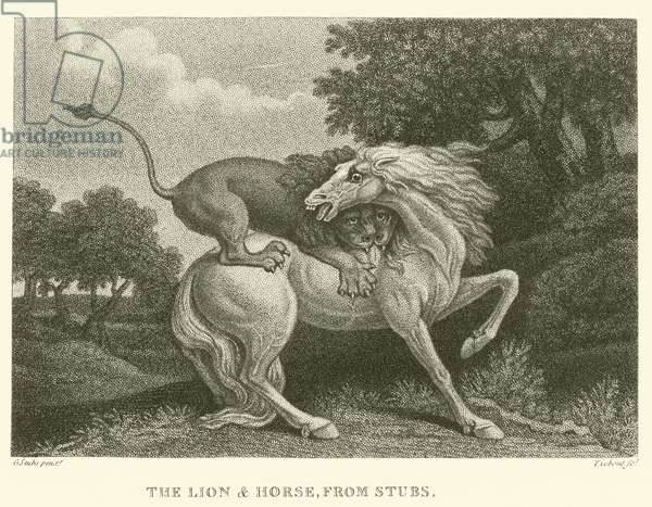 The Lion and Horse, from Stubs (engraving)