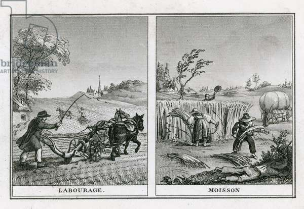 Agricultural scenes of ploughing and harvesting (engraving)