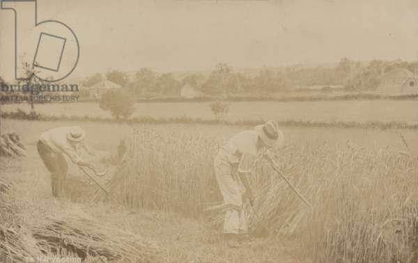 Harvesting (b/w photo)