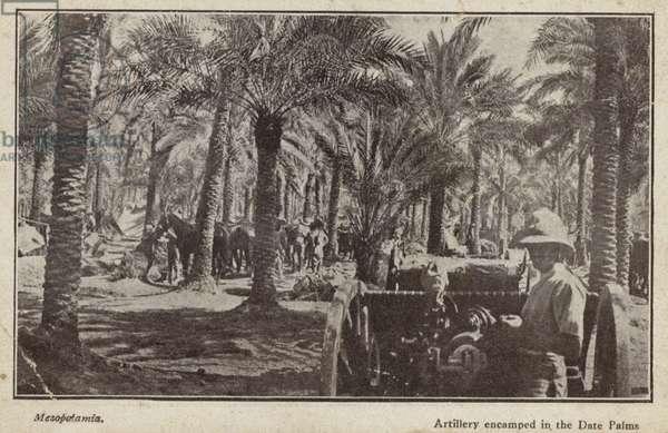 British artillery encamped among date palms, Mesopotamia, World War I (b/w photo)