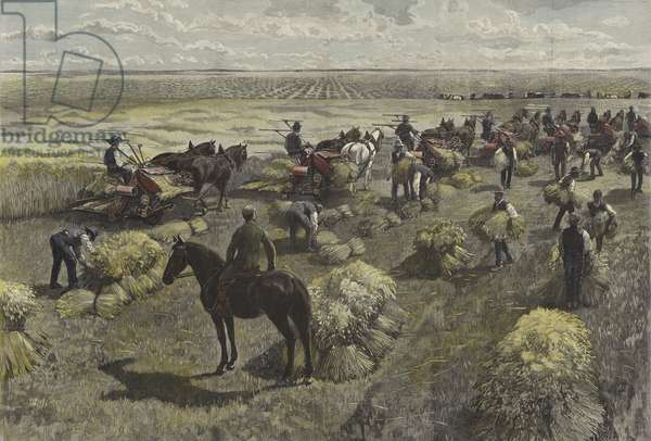 Harvesting wheat on the North American plains (coloured engraving)