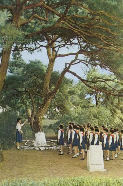 Student group being shown the pine tree in Mangyongdae, which the North Korean leader Kim Il-sung climbed as a child, striving to catch the rainbow, 1960s (colour photo)