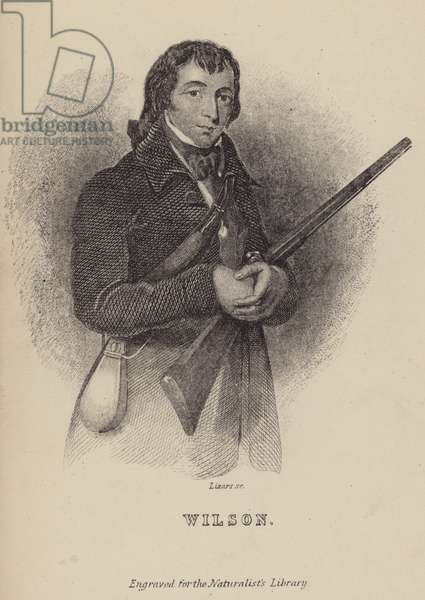 Alexander Wilson, Scottish ornithologist (engraving)