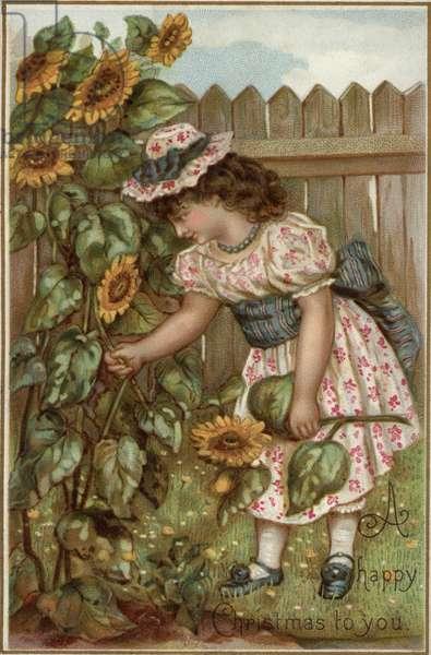Girl picking sunflowers in a garden (chromolitho)