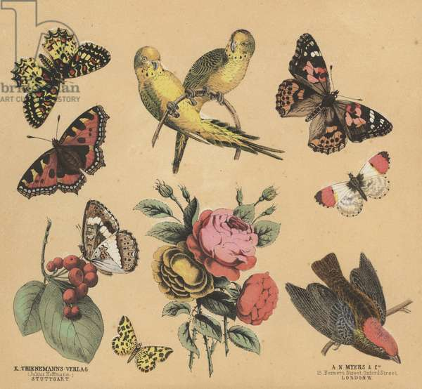 Scraps for Juveniles (colour litho)