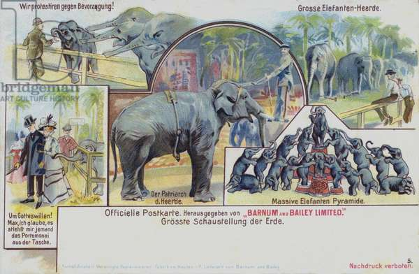 Performing elephants of Barnum and Bailey's Circus (chromolitho)
