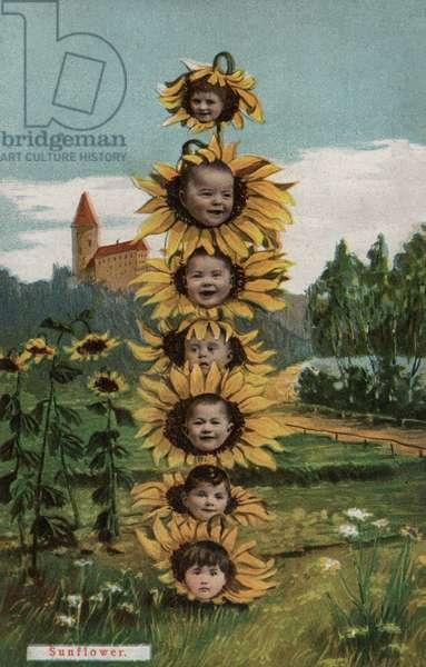 Sunflower (colour litho)