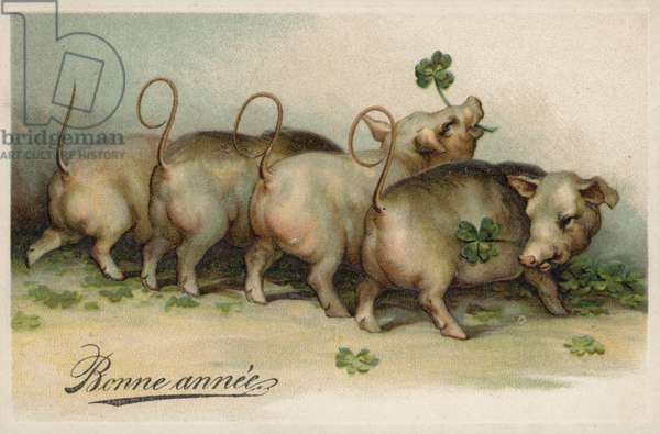 Pigs eating four leaf clover (colour litho)