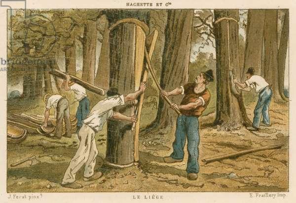 Harvesting cork (colour litho)