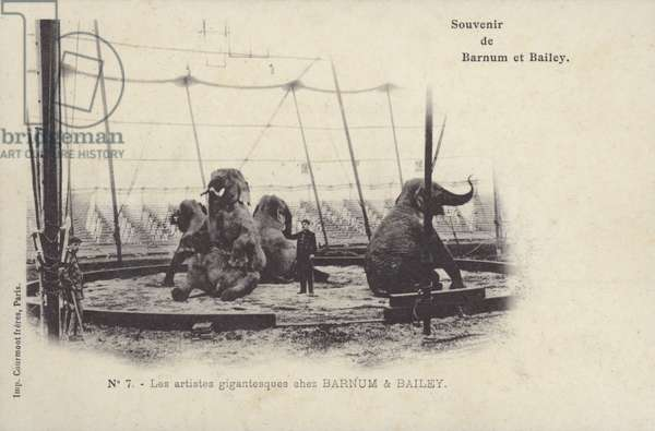 Performing elephants of Barnum and Bailey's Circus (b/w photo)