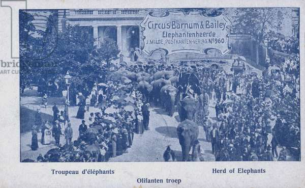 Herd of elephants of Barnum and Bailey's Circus (b/w photo)