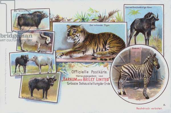 Animals of Barnum and Bailey's Circus (chromolitho)