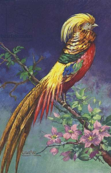 Tropical or exotic bird (chromolitho)