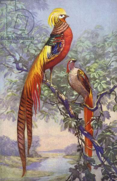 Tropical or exotic bird in a natural setting. (chromolitho)