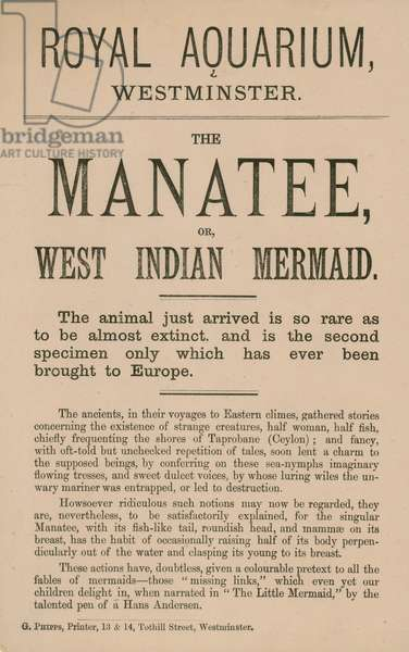 Advertisement for the manatee (engraving)