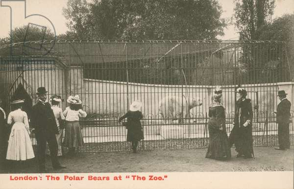 The Polar Bears at The Zoo, London (photo)