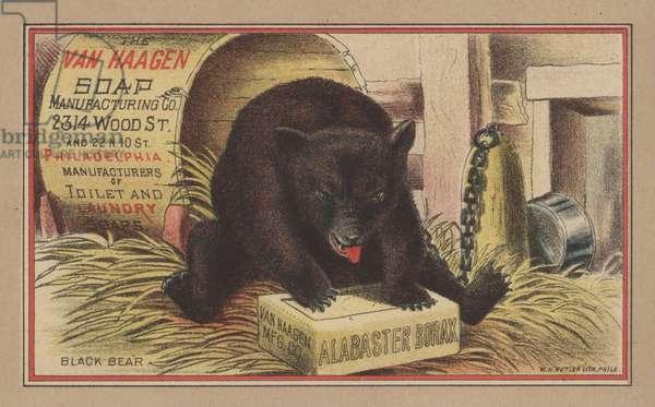 Black Bear (colour litho)