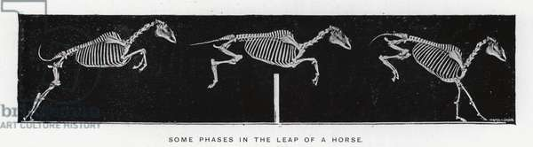Eadweard Muybridge: Some phases in the leap of a horse (b/w photo)