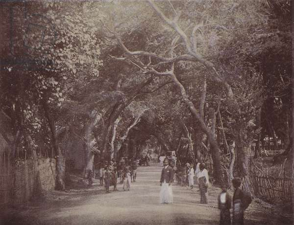 Skinner's Road, Colombo (coloured photo)