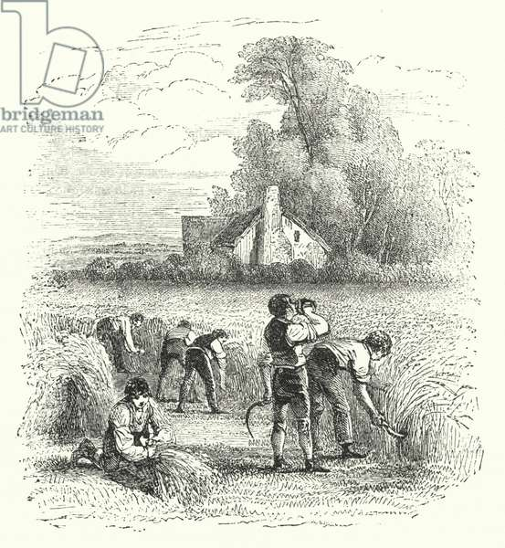August harvest (engraving)