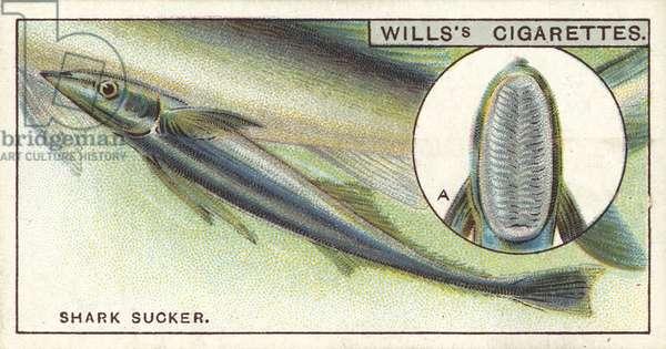 The Shark Sucker, which tours the seas as a dead-head passenger (chromolitho)