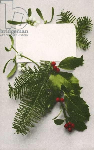 Holly, spruce and mistletoe, Christmas greetings card (colour photo)