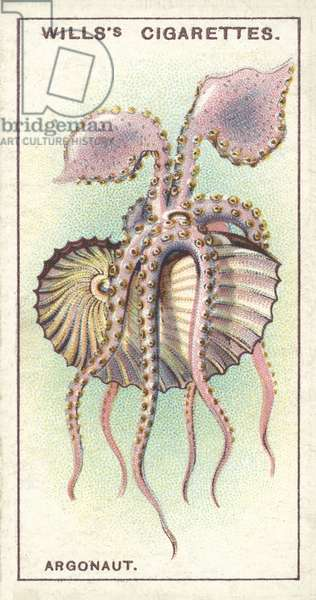 The Argonaut, an ocean navigator which sometimes leaves its beautiful vessel (chromolitho)