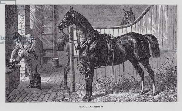 Brougham-Horse (engraving)