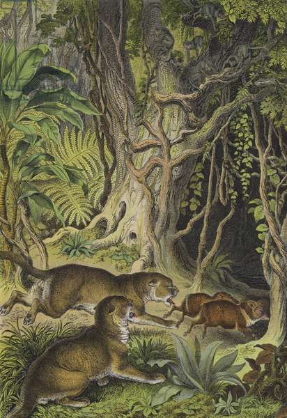 Animals of Guiana (colour litho)