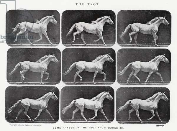 Eadweard Muybridge: The Trot (b/w photo)