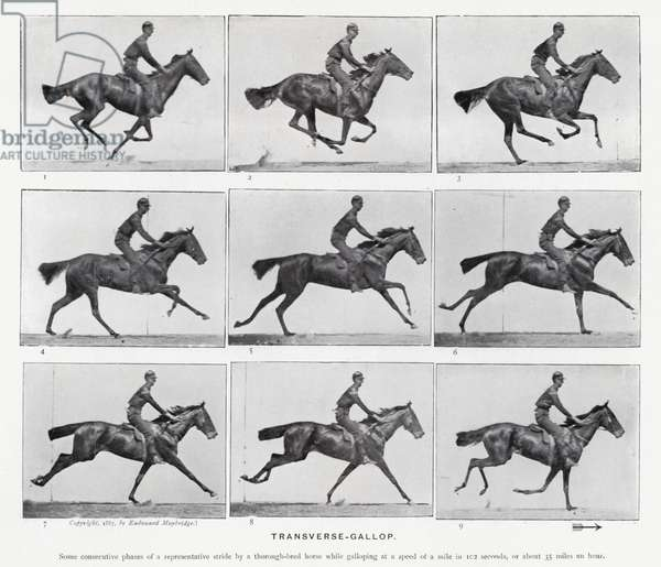 Eadweard Muybridge: Transverse-Gallop (b/w photo)