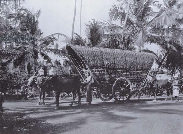 The Ceylon Mode of Transport, Double Bullock Cart (b/w photo)