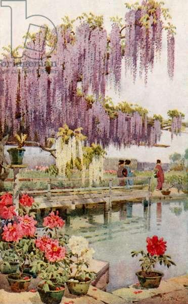 A Paeony Garden (colour litho)