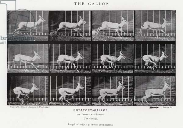 Eadweard Muybridge: The Gallop (b/w photo)
